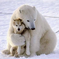 This picture shows a polar bear hugging a wolf.