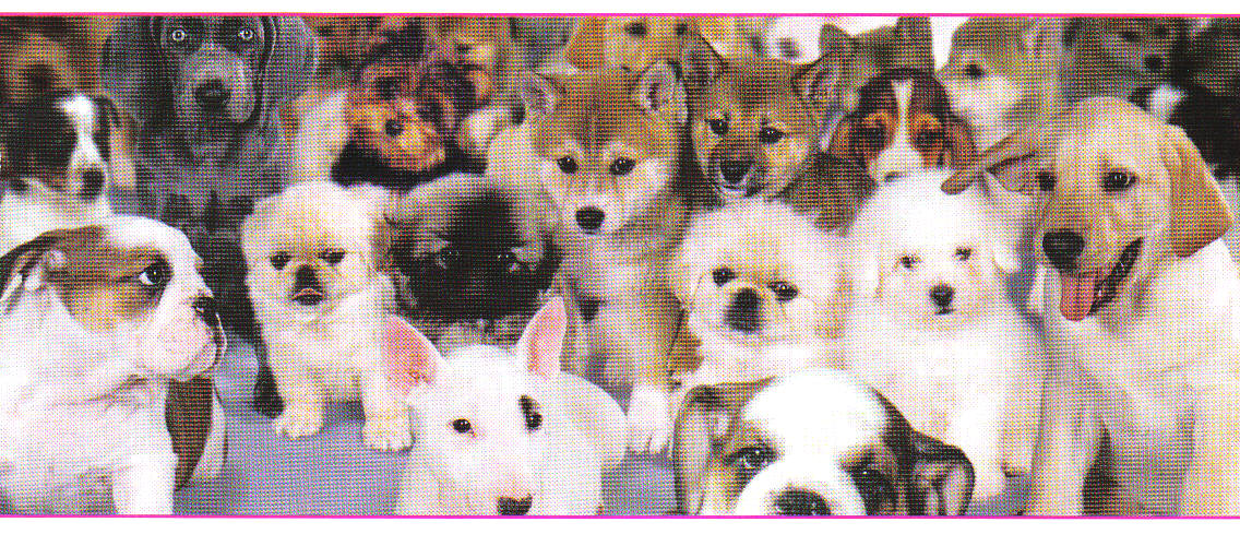 More than twenty dogs and puppies, all sizes and breeds