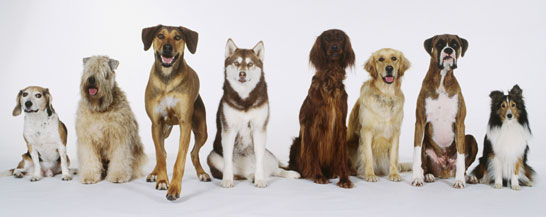 A beutiful bunch of dogs.