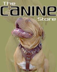 At the Canine Store
